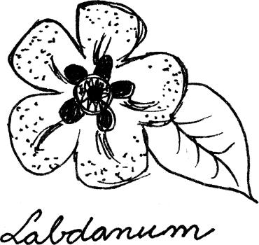 Arte da perfumaria